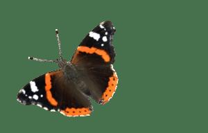 O' Papillons Dorés de Sainte-Julie